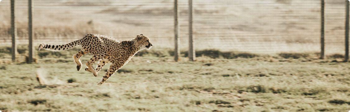 WordPress Hosting Fastest Cache